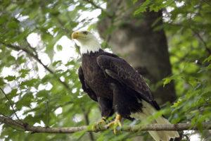 Eagle Mountain Sanctuary