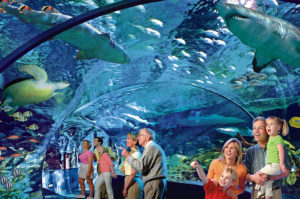 Ripley's Aquarium of the Smokies Underwater Tunnel